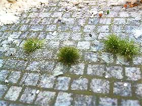Close-up of grass tufts stuck to paving